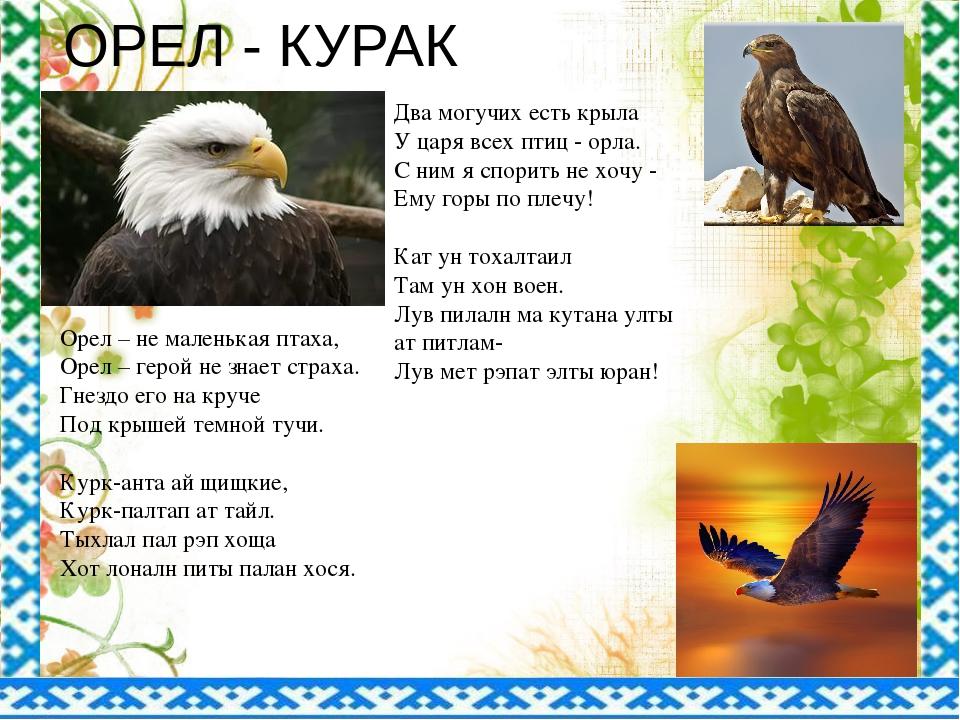 ОРЕЛ - КУРАК Два могучих есть крыла У царя всех птиц - орла. С ним я спорить...
