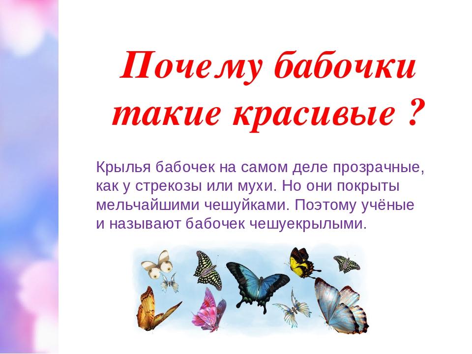 Почему бабочки такие красивые ? Крылья бабочек на самом деле прозрачные, как...
