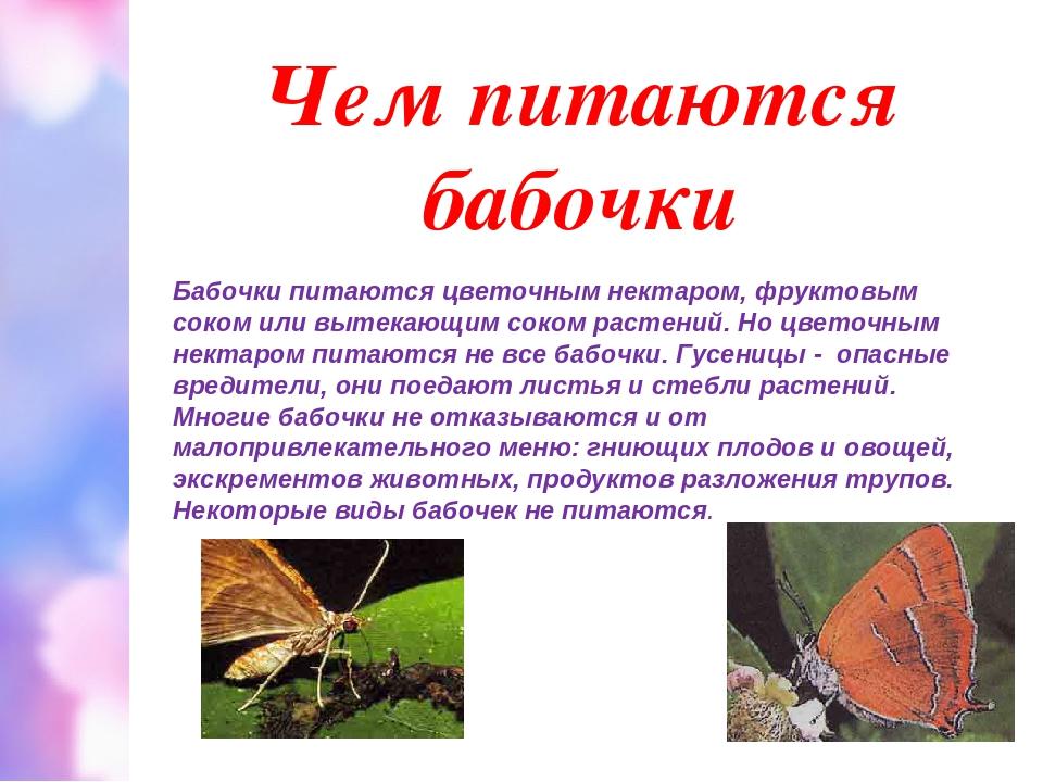 Чем питаются бабочки Бабочки питаются цветочным нектаром, фруктовым соком или...