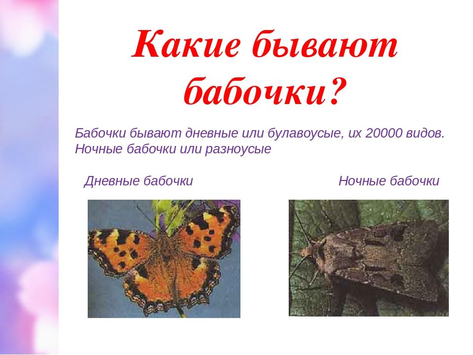 Какие бывают бабочки? Бабочки бывают дневные или булавоусые, их 20000 видов....