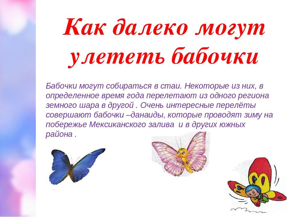 Как далеко могут улететь бабочки Бабочки могут собираться в стаи. Некоторые и...