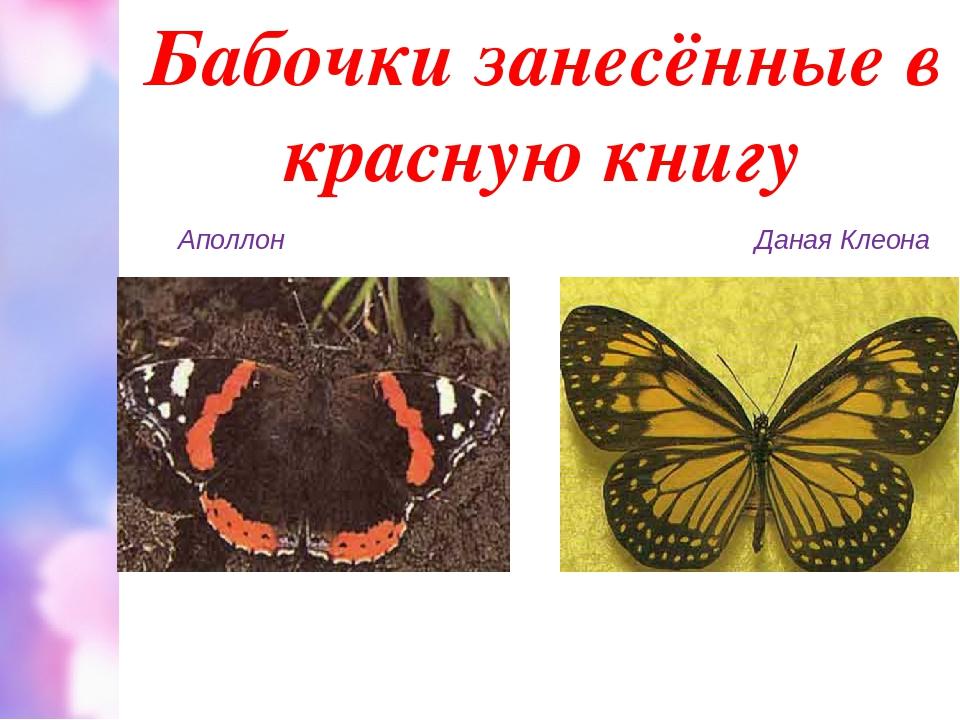 Бабочки занесённые в красную книгу Аполлон Даная Клеона