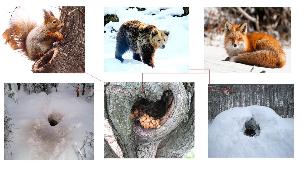 где зимуют дикие животные картинки давайте приготовим