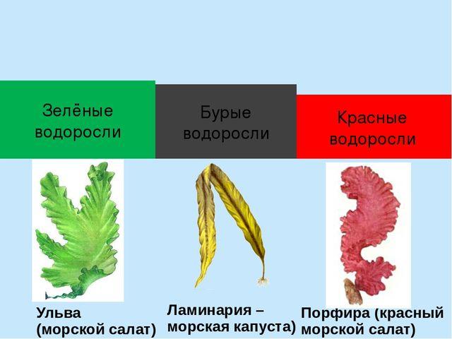 питание и дыхание вольвокса и ульвы