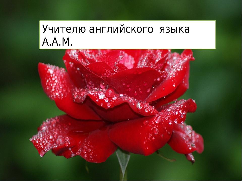 Альбина Михаиловна! Поздравляем с Днём учителя ! 11 а кл. Учителю английского...