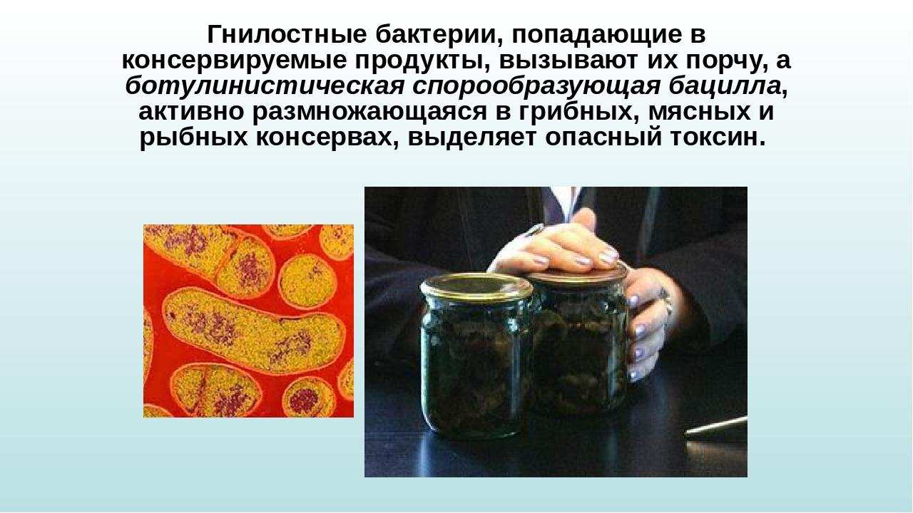 для вашего бактерии вызывающие порчу мяса автомобилей Таджикистане основании