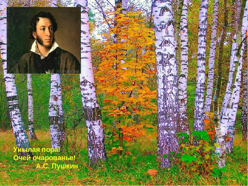 нашел пушкин унылая пора очей очарование картинки статье собран