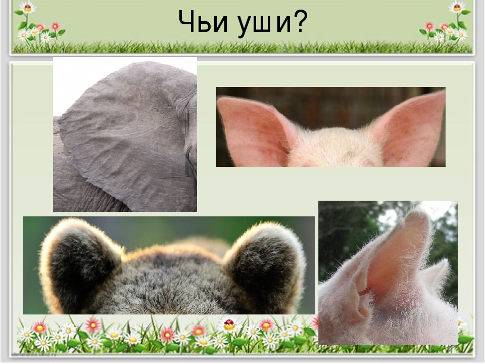 картинки ушей животных диких хочу