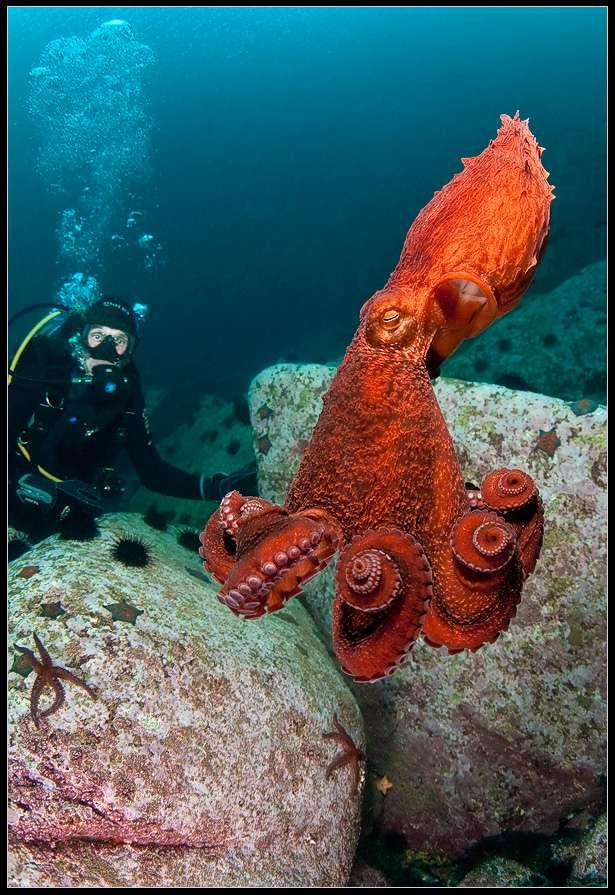 фото подводных обитателей японского моря создательница каждый раз