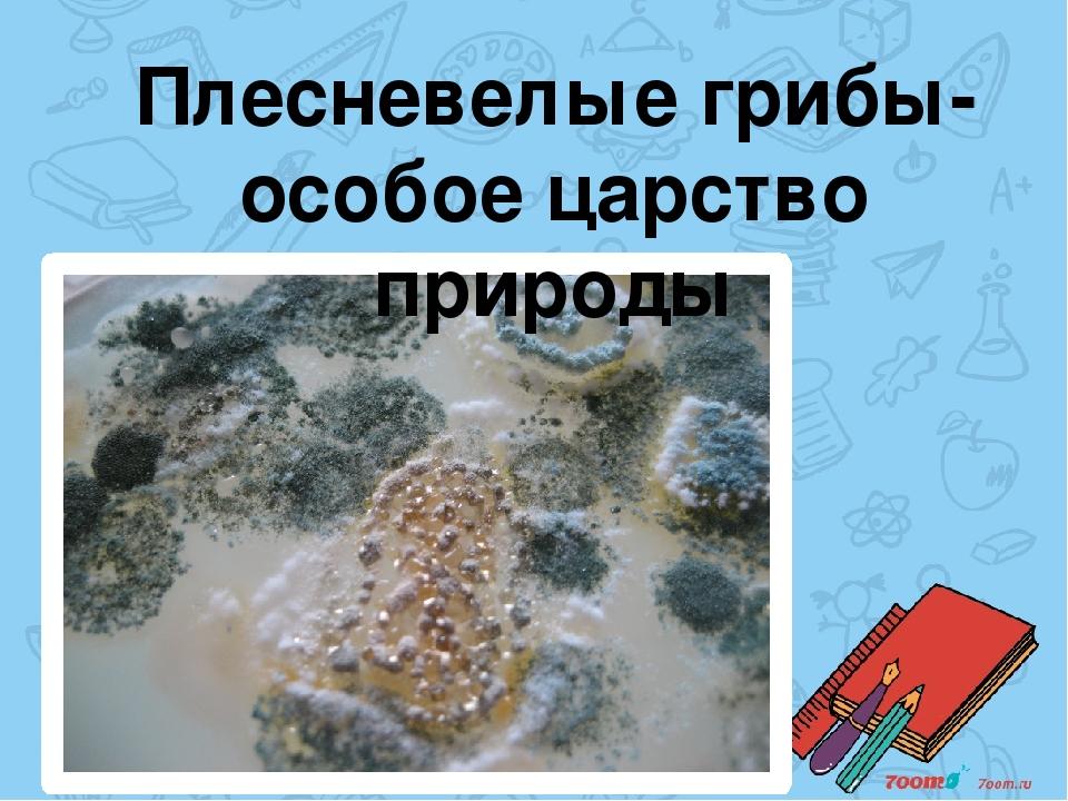 Плесневелые грибы-особое царство природы
