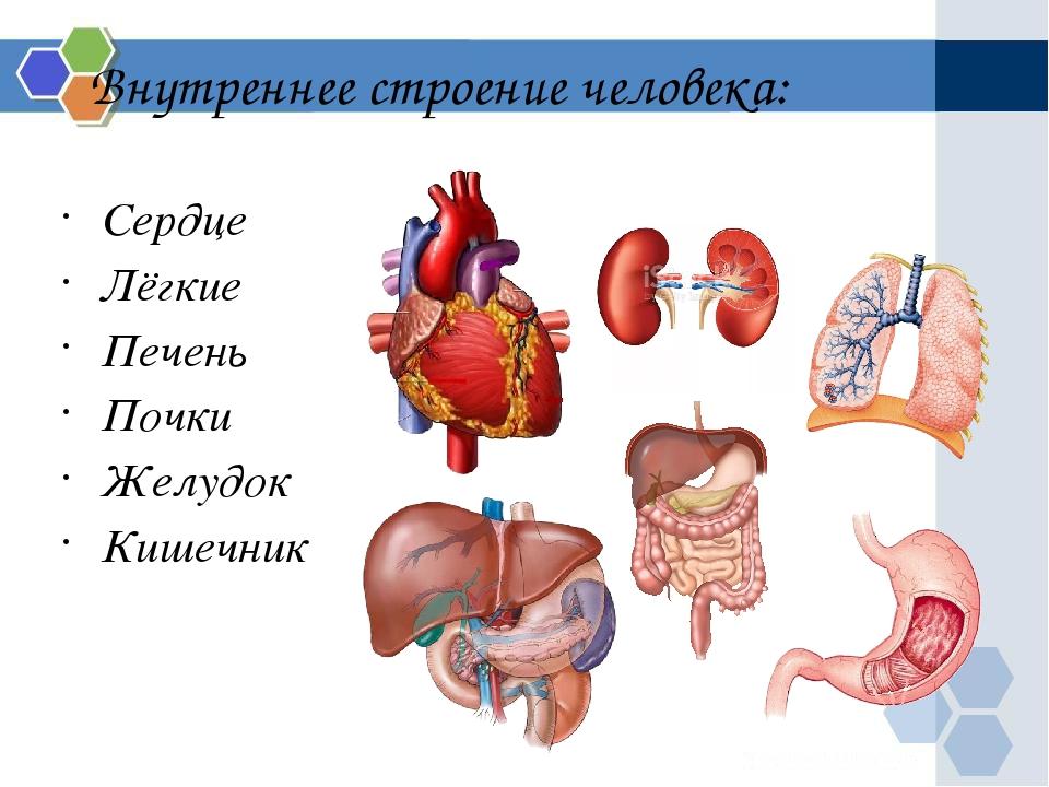 Сердце и желудок картинки