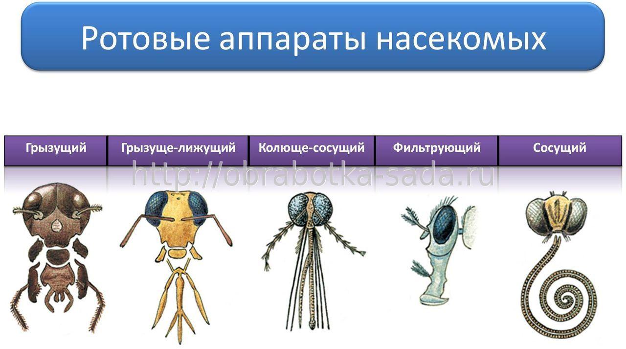 hello_html_m14b1271b.jpg