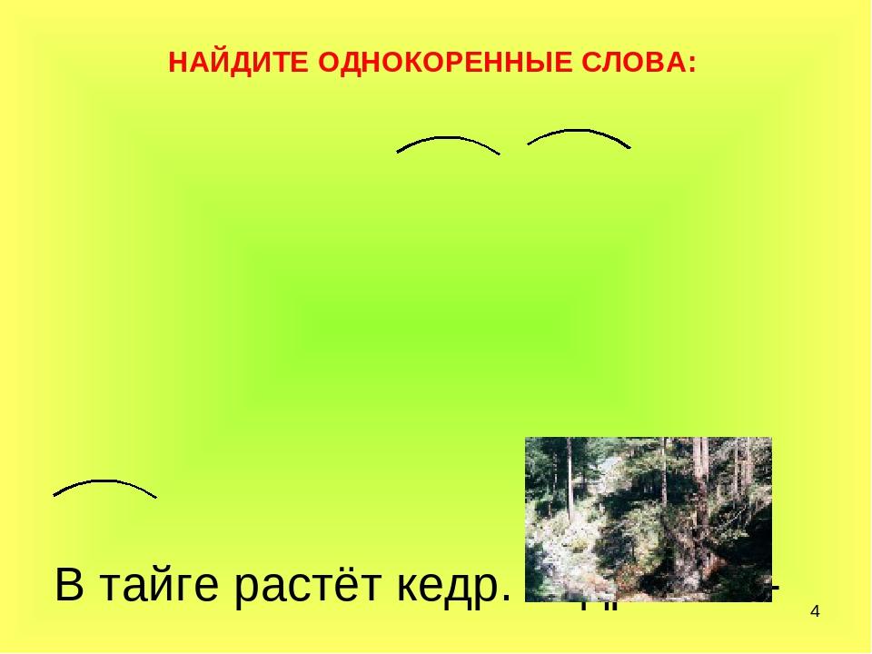 * В тайге растёт кедр. Кедровник- любимое место многих животных и птиц. Осень...