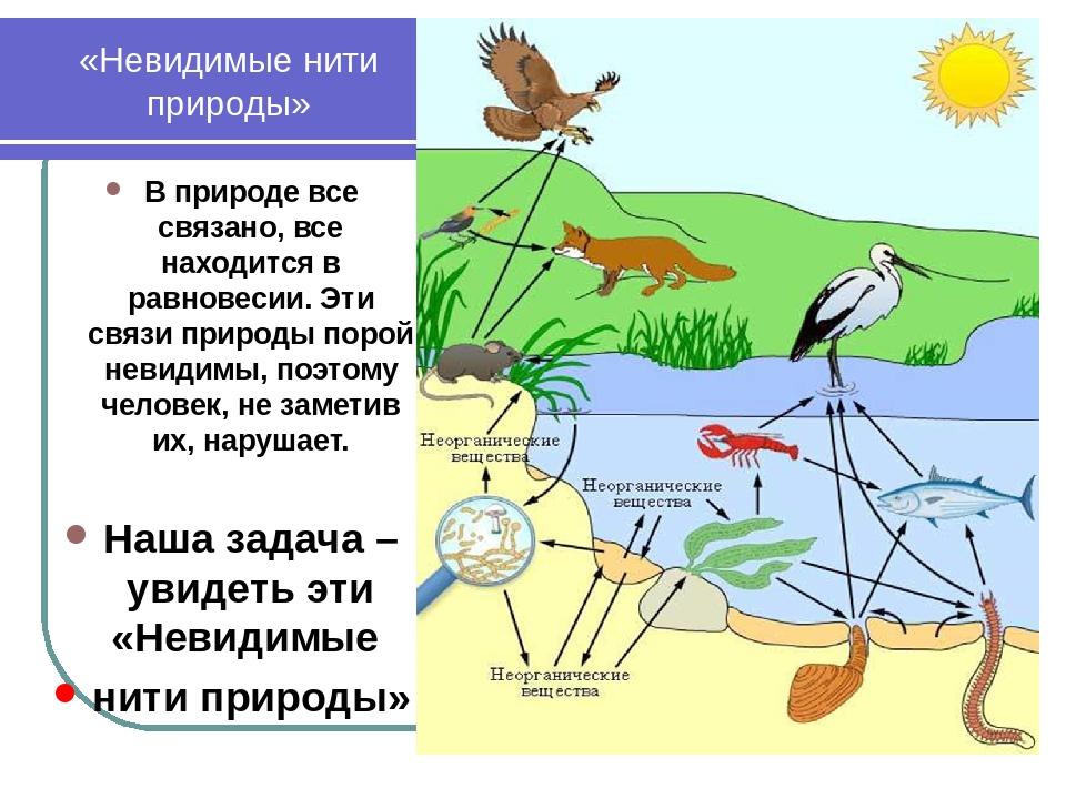 «Невидимые нити природы» В природе все связано, все находится в равновесии. Э...