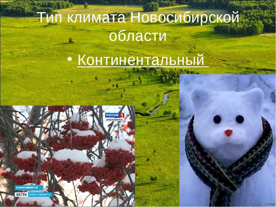 Тип климата Новосибирской области Континентальный