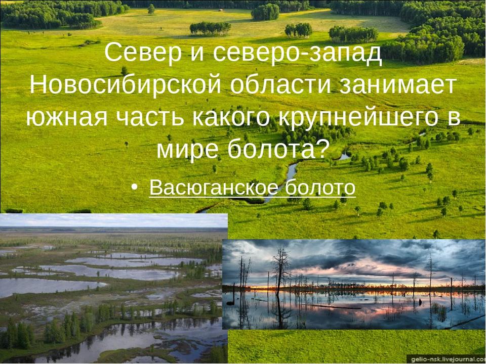 Север и северо-запад Новосибирской области занимает южная часть какого крупне...