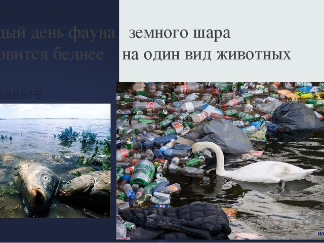 Добавьте заголовок слайда - 6 Каждый день фауна земного шара становится бедне...