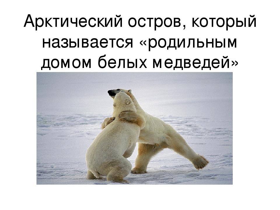 Арктический остров, который называется «родильным домом белых медведей»