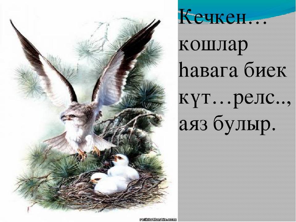 Кечкен… кошлар hавага биек күт…релс.., аяз булыр.