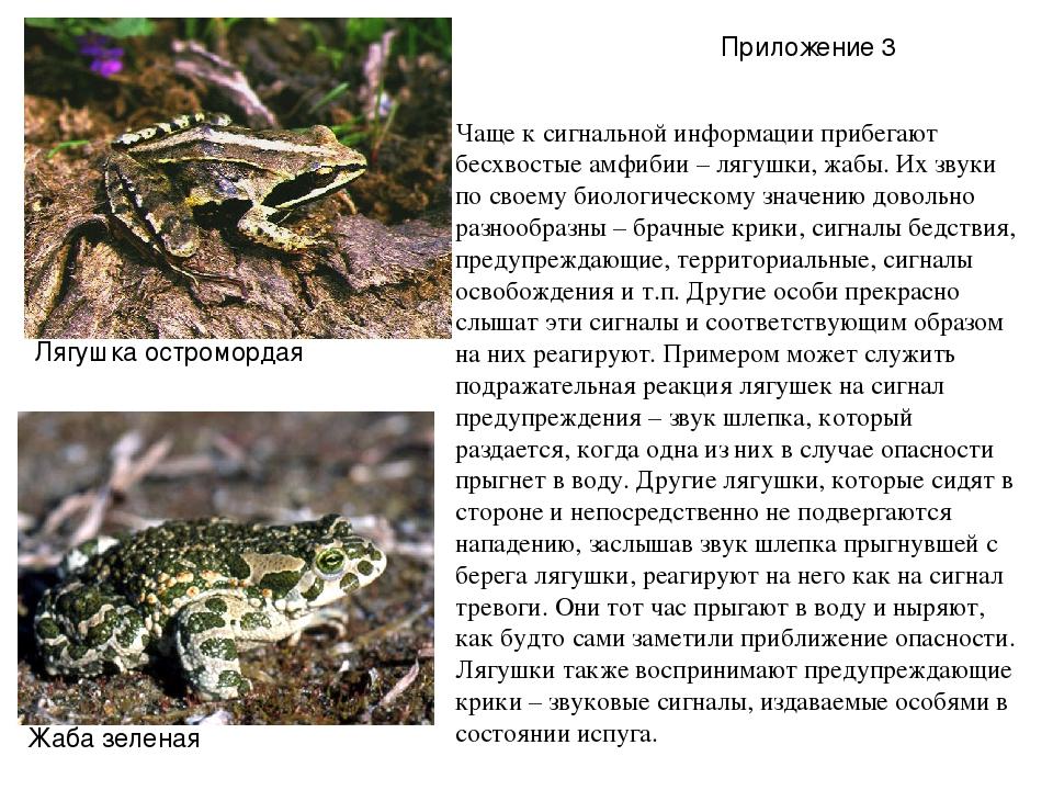 Чаще к сигнальной информации прибегают бесхвостые амфибии – лягушки, жабы. Их...