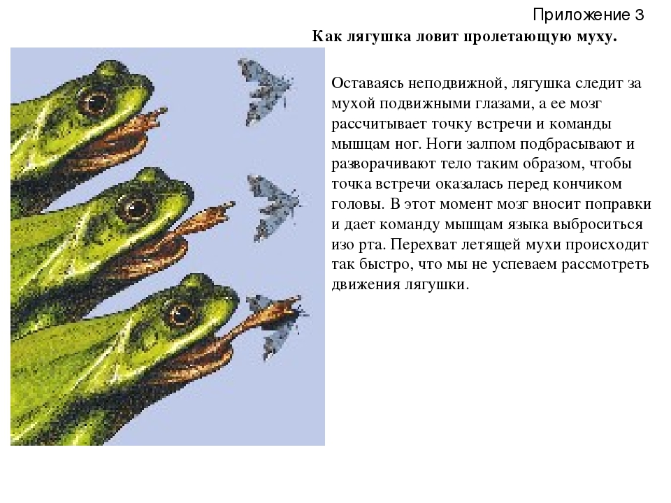 Как лягушка ловит пролетающую муху. Оставаясь неподвижной, лягушка следит за...