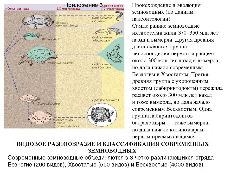 Происхождение и эволюция земноводных (поданным палеонтологии) Самые ранние з...