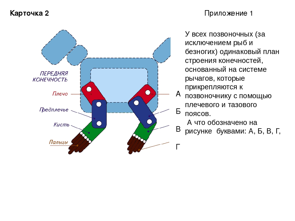 Карточка 2 А Б В Г У всех позвоночных (за исключением рыб и безногих) одинако...
