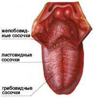 Язик  Вікіпедія