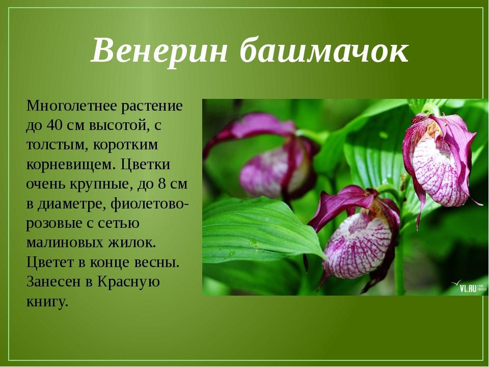 Картинки о растениях 3 класс, картинки яндекс
