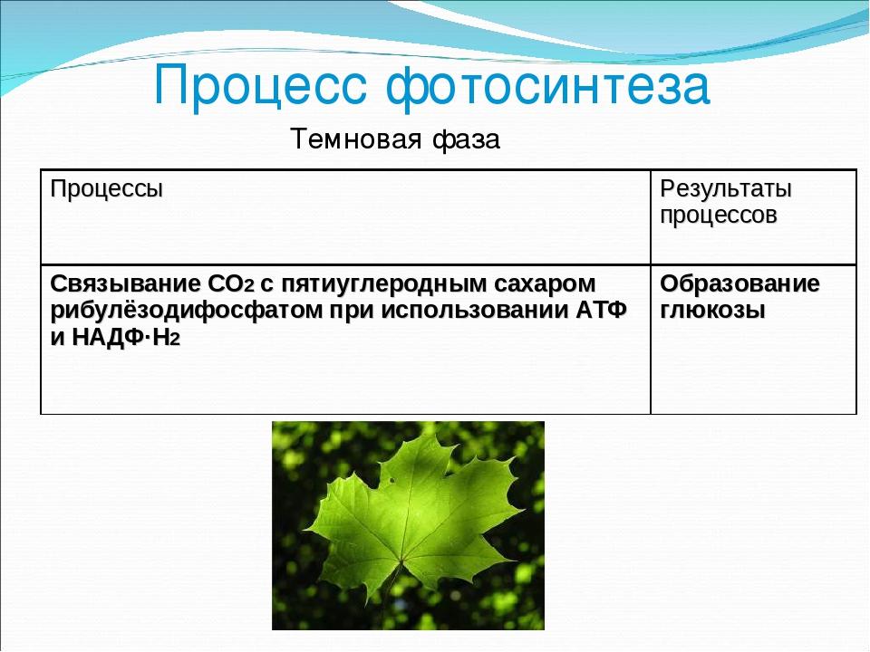 подробное описание процесса фотосинтез гостинице агат