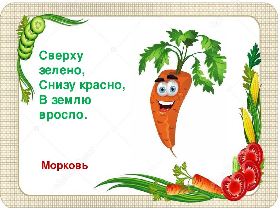 Сверху зелено, Снизу красно, В землю вросло. Морковь