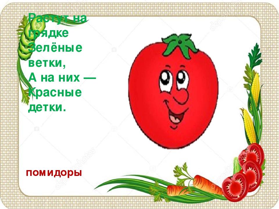Растут на грядке Зелёные ветки, А на них — Красные детки. помидоры