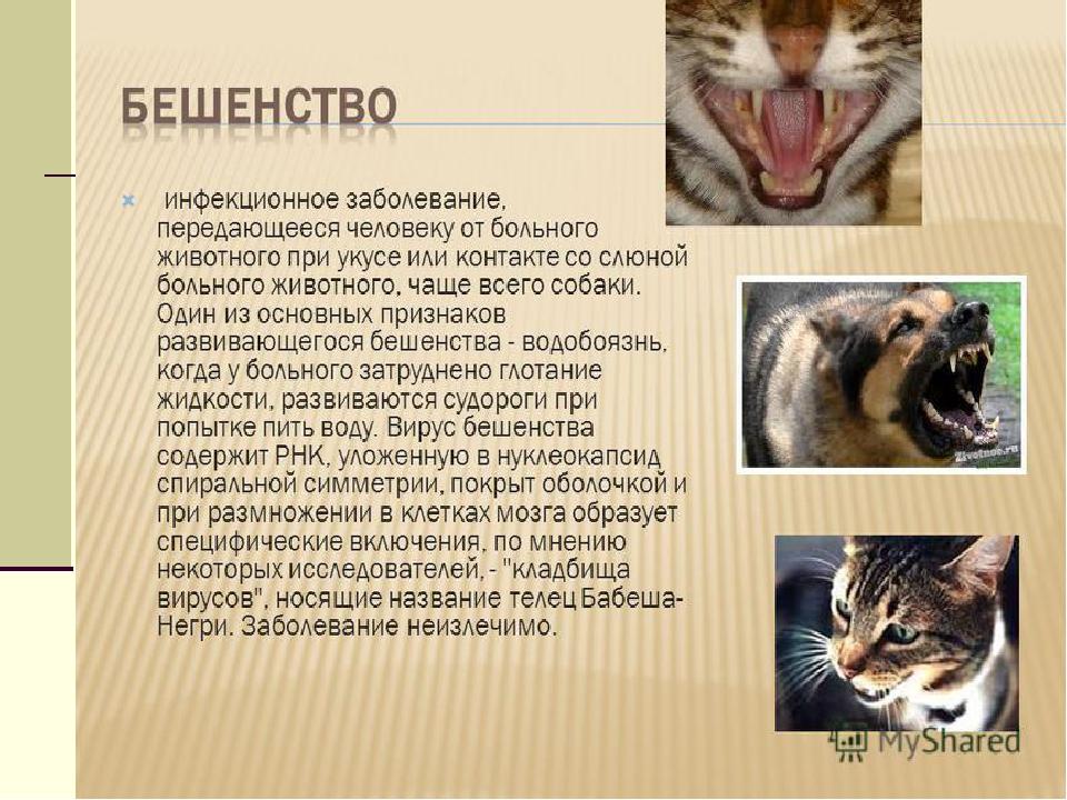 Доклад по биологии на тему бешенство 5662