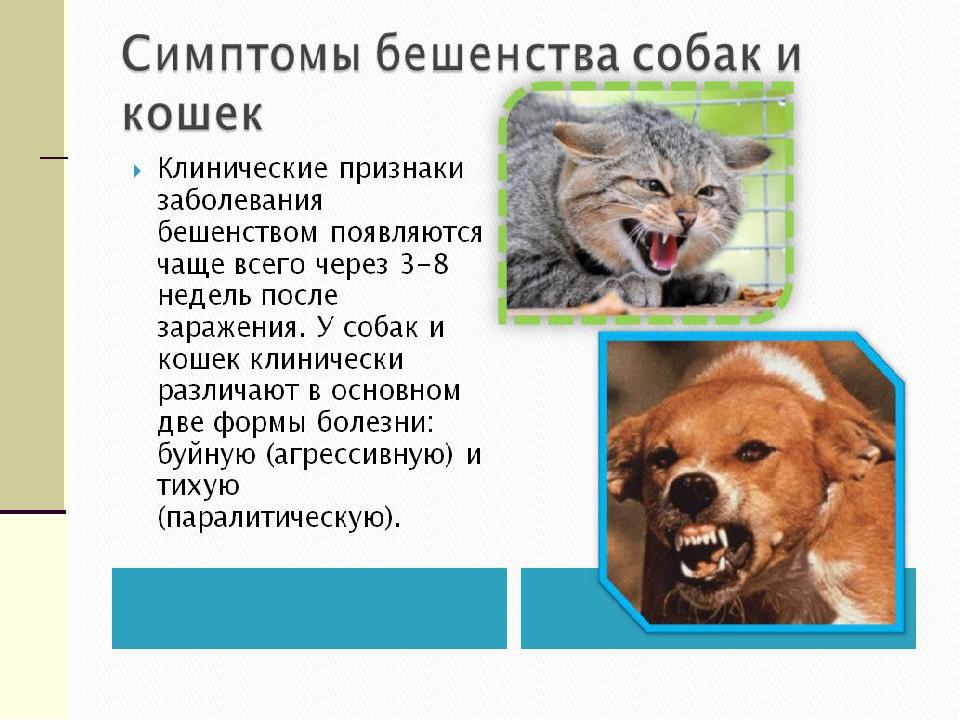 признаки заражения бешенством от укуса собаки Юлия