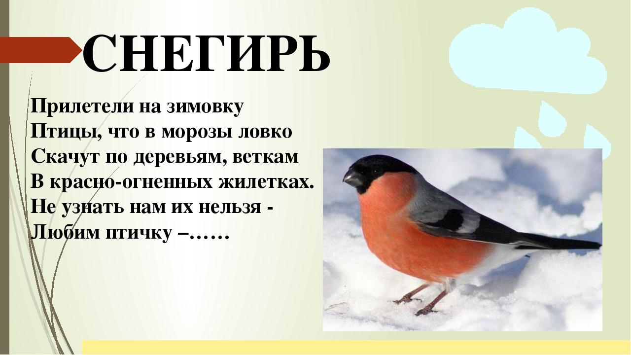 своих отзывах картинки и рассказы про птиц если