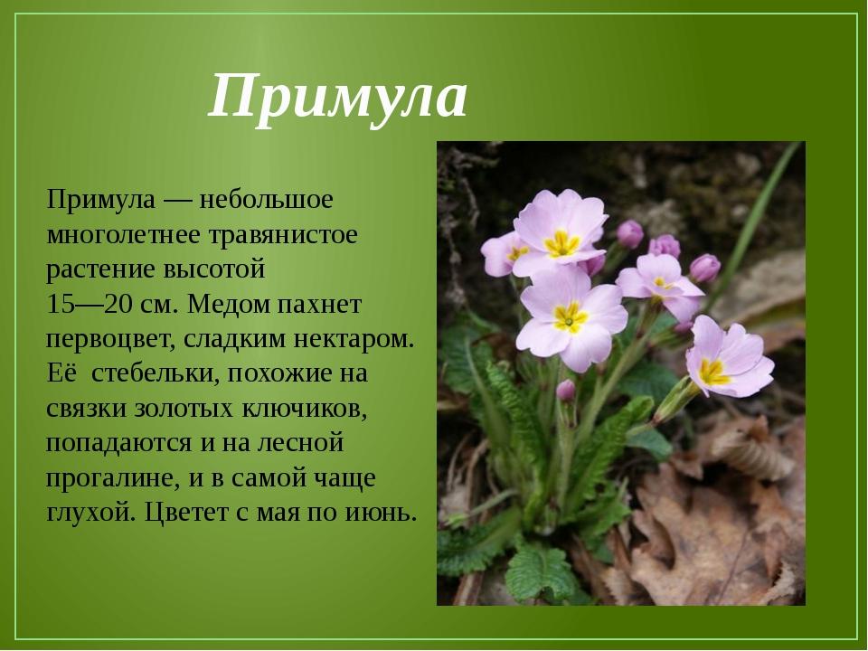 Фото цветов с описанием