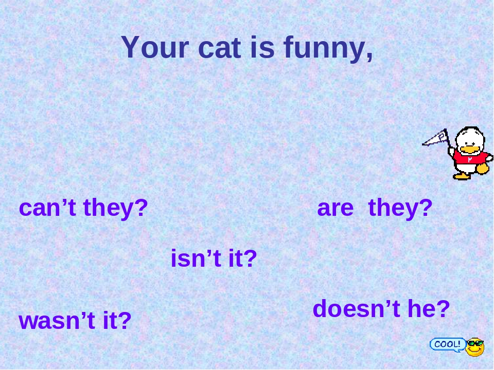 Your cat is funny, can't they? are they? wasn't it? isn't it? doesn't he?
