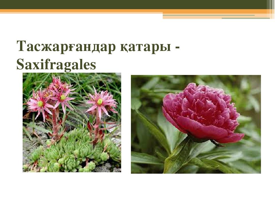 Тасжарғандар қатары - Saxifragales