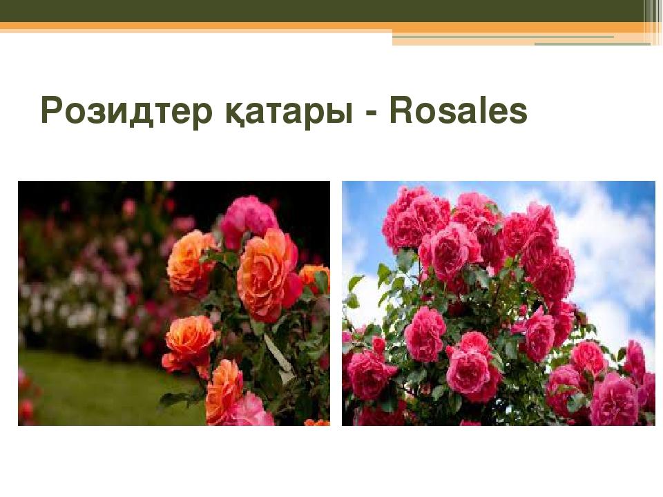 Розидтер қатары - Rosales