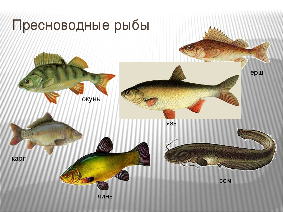 правильно название картинки речной рыбы социалистических странах