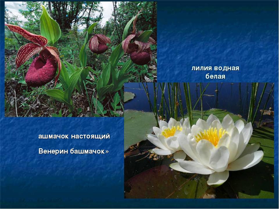 воды, картинки растений занесенных в красную книгу россии с названиями снимках часто