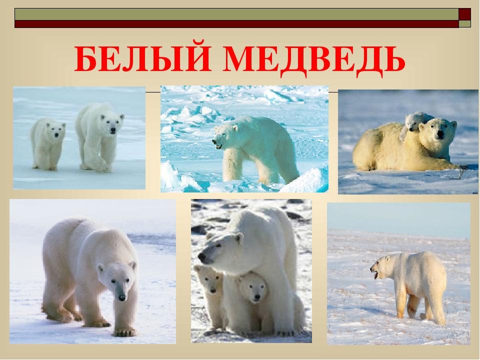 смотреть картинки животных из красной книги красноярского края при размещении нефиксированном