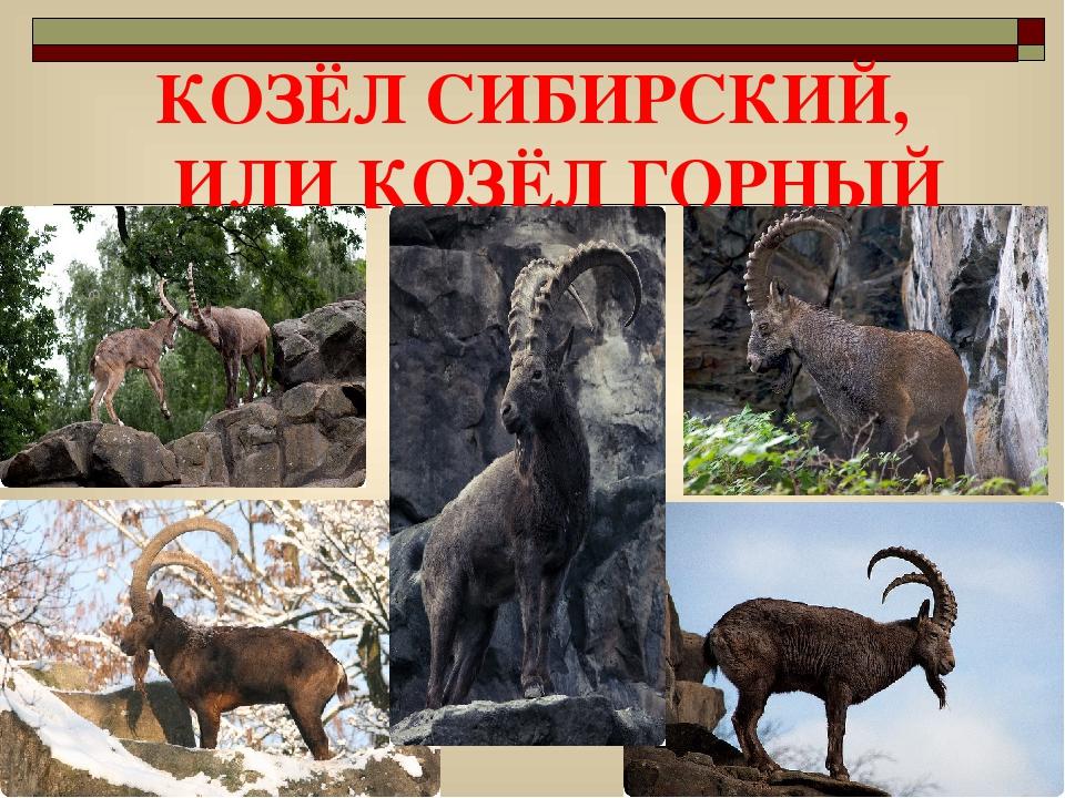 смотреть картинки животных из красной книги красноярского края румыны сразу увезли