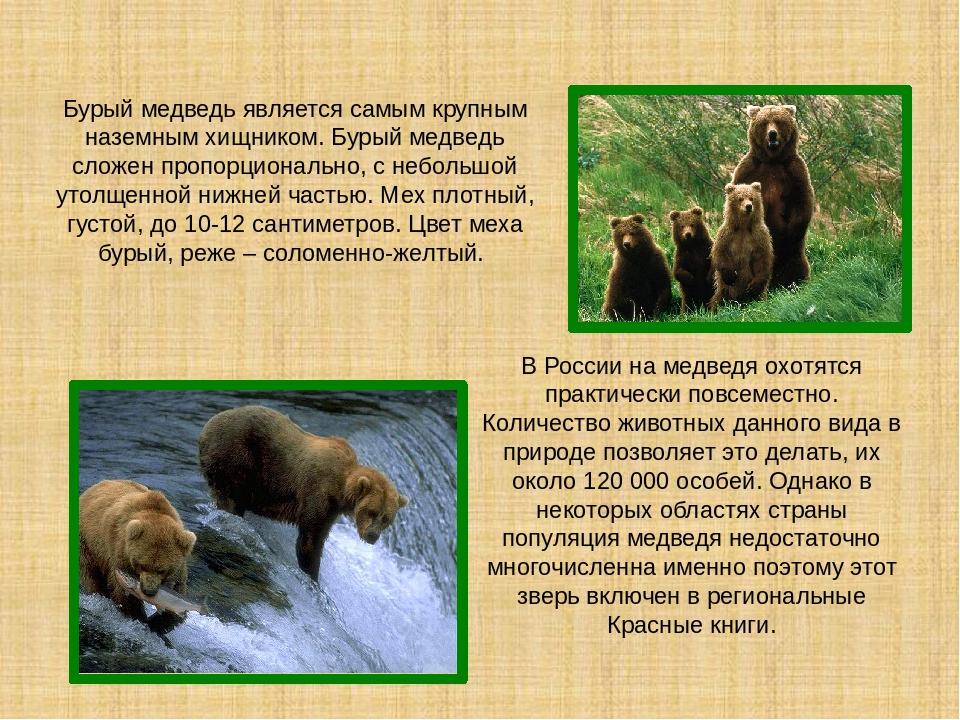 для фото и описание животного россии поговорка это устоявшееся