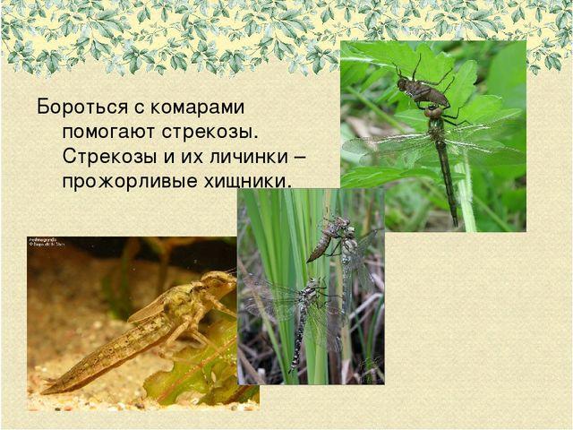 Федора чем питаются личинки комаров предприниматель задумал