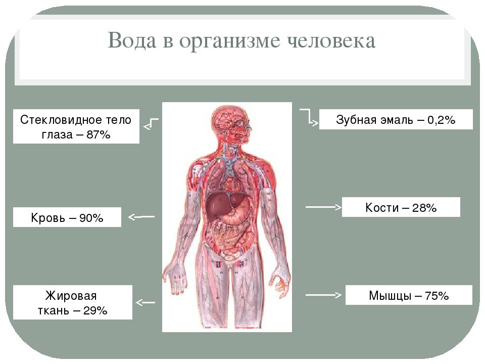Вода в организме человека Зубная эмаль – 0,2% Кости – 28% Мышцы – 75% Жировая...