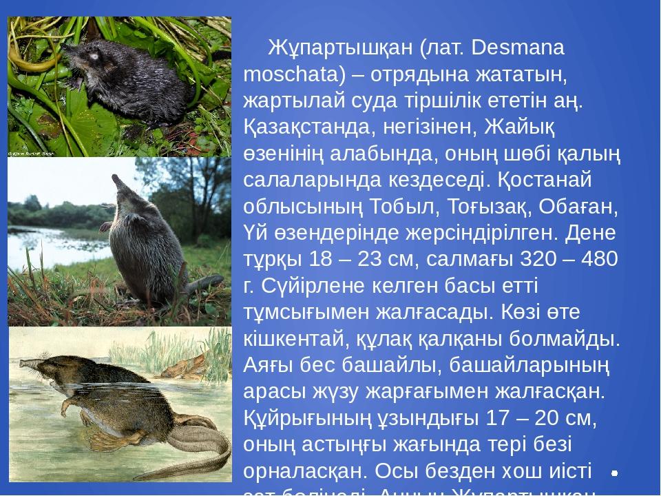 Жұпартышқан (лат. Desmana moschata) – отрядына жататын, жартылай суда тіршіл...