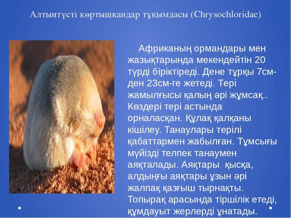 Алтынтүсті көртышқандар тұқымдасы (Chrysochloridae) Африканың ормандары мен ж...