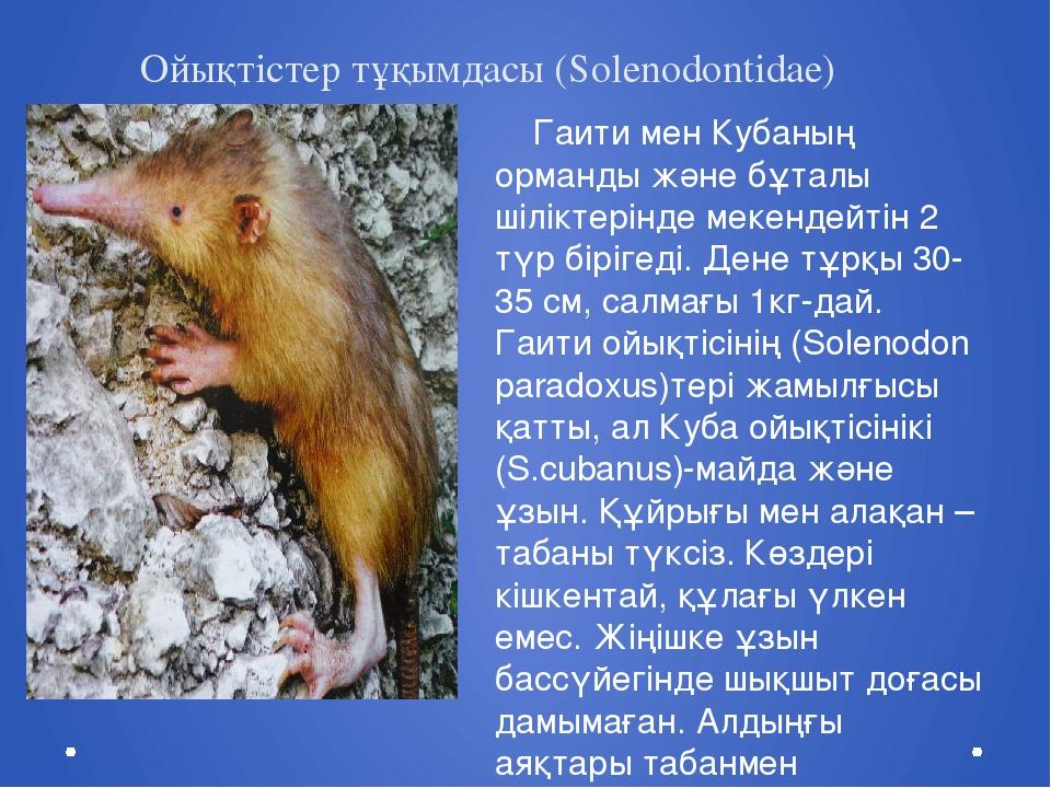 Ойықтістер тұқымдасы (Solenodontidae) Гаити мен Кубаның орманды және бұталы ш...