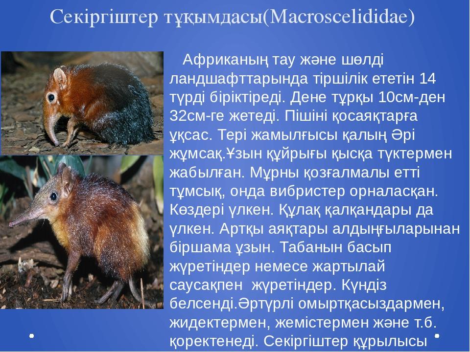 Секіргіштер тұқымдасы(Macroscelididae) Африканың тау және шөлді ландшафттарын...